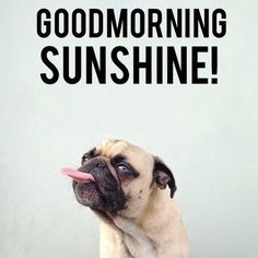 Are you looking for memes of good morning to share with your friends and colleagues? Here we have added Funny good morning memes that will cheer your mornings instantly and will make you feel less lazy. Funny Memes For Him, Funny Good Morning Memes, Good Morning Texts, Good Morning Greetings, Good Morning Good Night, Morning Humor, Funny Dogs, Funny Weekend, Morning Morning