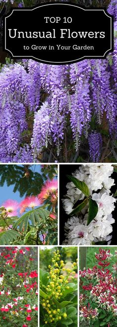 We are all aware of the irresistible fragrance of hyacinth, gardenia, iris and many other popular fragrant plants that can easily turn our garden into a fragrant paradise. In fact, we have recently shared a list of our favorite, most popular fragrant plants every gardener should consider for making a scented garden. But 10 is a very small number and […]