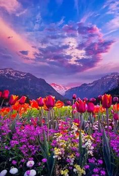 Tulip Valley by Erik Sanders ~ Interlaken, Switzerland. Gorgeous Tulips and a beautiful sky. Mother Nature sure knows how to call attention to herself. Beautiful World, Beautiful Places, Beautiful Sky, Landscape Photography, Nature Photography, Amazing Photography, Candy Photography, Travel Photography, Photography Flowers