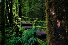 """visitheworld:    The trails of Doi Inthanon National Park in Chiangmai, nicknamed """"the roof of Thailand"""" (by Nobythai)."""