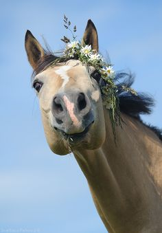 Sweet horse with flowers