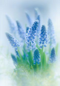 Photo Spring by VeronikaK on 500px
