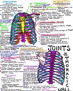 joints of the thorax, thoracic, ribcage, med school note. Medical Students, Nursing Students, Radiology Student, Nursing School Notes, Medical School, Ob Nursing, Nursing Schools, Medicine Notes, Medicine Student