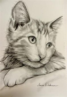 "Daily Paintworks - ""Little Captain"" - Original Fine Art for Sale - © Tammie Dickerson Cat Sketch, Gray Matters, Fine Art Gallery, Cat Art, Charcoal, Pencil, Sketches, Portraits, The Originals"
