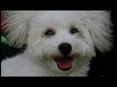 Sunshine Bullet, Sunshine, Dogs, Animals, Animales, Animaux, Pet Dogs, Nikko, Doggies