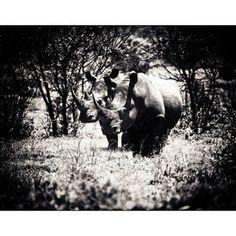 Rhino by Mikeobrien