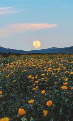 flores Pin ➵ Ashley56_ ♡