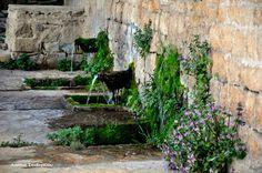 Καλαρρύτες, Τζουμέρκα - Kalarrytes, Tzoumerka, Epirus, Hellas