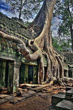 Angkor Wat  Not medieval, but just the writing inspiration I was looking for. Looks like something out of a fantasy movie!