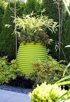 Golden fuchsias and black mondo grass foam up around the base of an Italian pot from Design Within Reach. The pot holds the little red-flowering annual Cuphea `Bat Face' and variegated bamboo (Pleioblastus viridistriatus `Chrysophyllus').