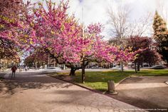 La primavera en tot el seu esplendor al centre de la ciutat. Fotos: Isaias Mena - Ajuntament de Tarragona Sidewalk, Florida, Spring, Side Walkway, The Florida, Walkway, Walkways, Pavement
