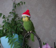 Knitted Budgie by Carol Harrison    Budgerigar  needle felted and Christmas hat
