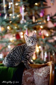 http://allthebeautifulchristmas.blogspot.com