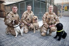 Army Jobs: Military working dogs by Army Jobs, via Flickr