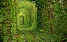 ...  known as the Tunnel of Love, the absolutely awe-inspiring tunnel of trees provides a natural archway for trains near Rivne, Ukraine. Description from pinterest.com. I searched for this on bing.com/images