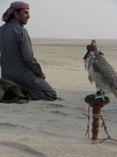 Arab Falconry