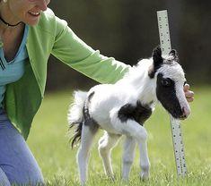 Cute Foal #babyanimal
