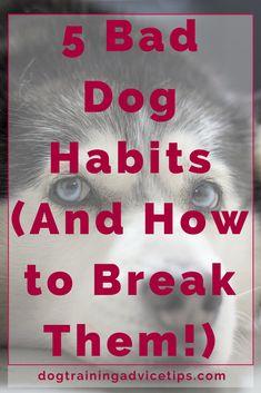 5 Bad Dog Habits (And How to Break Them!)   Dog Training Tips   Dog Obedience Training   Dog Training Commands   http://www.dogtrainingadvicetips.com/break-dogs-bad-habits-good #It'sADogsLife