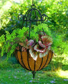 Shade: maidenhair fern, rex begonia, pink polka dot plant