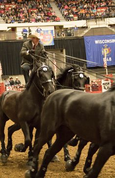 Jason Goodman and Percheron Thunder at Midwest Horse Fair https://www.MidwestHorseFair.com https://www.facebook.com/midwesthorsefair https://twitter.com/MwHorseFair