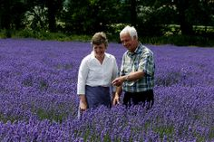 How to grow lavender - interview with a UK lavender grower via My Garden School.