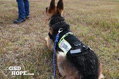 フランスの警察犬ディーゼルや訓練するワーキングドッグ達も着用している同類の犬ベストを2代目ズィーナが来てから購入。  http://gsdhope.com/dog-vest