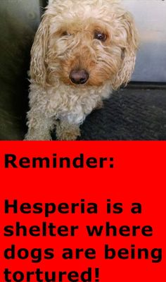 ★❥★RESCUED★❥★~ Animal ID #A001535 ‒ I am a Female, Apricot Miniature Poodle. The shelter thinks I am about 3 years old. I have been at the shelter since May 04, 2015. Hesperia Animal Control ‒ (760) 947-1700 11011 Santa Fe Avenue Hesperia, CA Fax: (760) 949-1722 https://www.facebook.com/OPCA.Shelter.Network.Alliance/photos/pb.481296865284684.-2207520000.1432047958./822270054520695/?type=3&theater