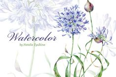 Watercolor agapanthus flower by Natalia Tyulkina on Creative Market