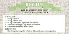 Tip-toe into a Successful Tomato Season | Dennis' 7 Dees
