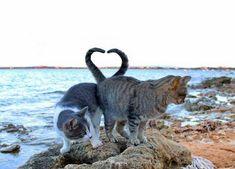 Bildresultat för kattkoloni sardinien