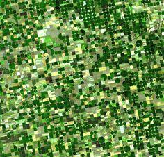 La Contea di Finney si trova nello stato del Kansas, negli Stati Uniti. Un tempo era tutta prateria, ora grazie ai sistemi di irrigazione è diventata un'ampia distesa di campi coltivati, per lo più di mais e sorgo.  estate del 2001. foto: NASA/GSFC/METI/Japan Space Systems, and U.S./Japan ASTER Science Team