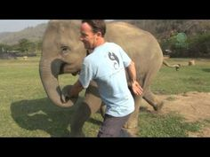 Baby Elephant Runs Like A Puppy To Greet Her Favorite Person