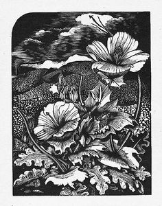 John Nash (British, 1893-1977). Horned Poppy. 1927. (wood engraving)