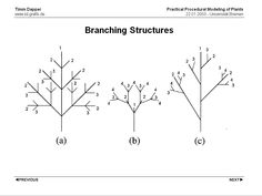 overview_morphology_branching.gif