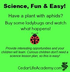 Science Lesson Plans, Science Lessons, Homeschool, Encouragement, How To Plan, Shit Happens, Children, Fun, Young Children