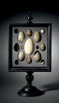 Rare présentoir à oeufs d'oiseaux du Paléartique réalisé par les Ets Boubée à Paris, 1945.
