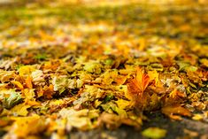 Autumn leaves in park photo by on Envato Elements Autumn Park, Autumn Forest, Autumn Trees, Autumn Leaves, Shallow Depth Of Field, Park Photos, Tree Leaves, Pumpkin, Nature