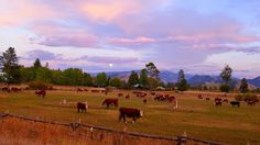 Ranch life at sunset-- Someday this will be similar to or view from the front door of our future home!