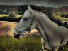 POnuka jazdy a prenajmu koni.Jazdy 10EUR,prenajom kona 80EUR.Pridite sa odreagovat do krasnej prirody v spolocnosti krasnych tvorov.Objednavky na tel.c.0915375183