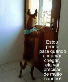 MELHOR MOMENTO DE CHEGAR EM CASA <3 <3 <3 #petmeupet #filhode4patas #maedepet #maedecachorro #maedegato #paidecachorro #paidegato #cachorro #gato #amorincondicional