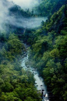 tulipnight:  Magic of the Gorge byMatthew Cooper