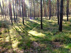 Farbtupfen: Spree + Wald + Gurken