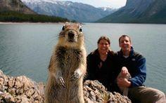 Photo bomb squirrel