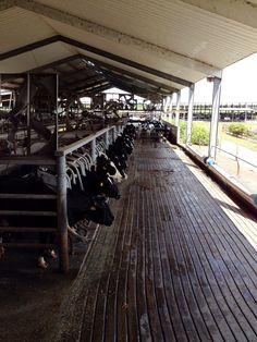 Dakin Dairy Farm tour in Myakka FL