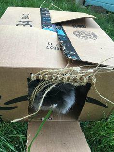 Easy DIY Rabbit Toys - The Cape Coop