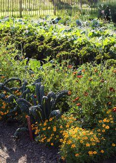 Kasvimaan kevätkunnostus virittää kasvimaan parhaaseen kuntoon - kasvit tarvitsevat paljon aurinkoa, kuohkean maan, vettä ja ravinteita.