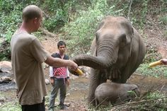 Feeding time! yummo! - Volunteer with GoEco in Thailand with the Elephant Rescue and Conservation program - for more information visit our project page http://www.goeco.org/project/378/Volunteer_in_Thailand_Elephant_Rescue_and_Conservation#