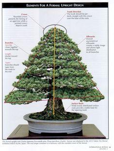 ~ Description of an upright bonsai tree ~