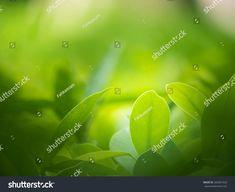 Closeup Nature View Green Leaf On ภาพสต็อก (แก้ไขตอนนี้) 302691428 Nature Green, Green Leaf Background, Nature View, Green Leaves, Close Up, Stock Photos