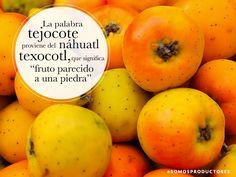 """La palabra tejocote proviene del náhuatl texocotl, que significa """"fruto parecido a una piedra"""". SAGARPA SAGARPAMX #SomosProductores"""